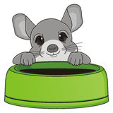 Head of chinchilla and bowl Stock Photo