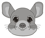Head of chinchilla Stock Photos