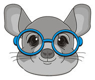 Head of chinchilla Royalty Free Stock Images