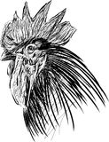 Head of a cock Stock Image