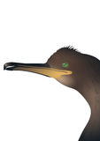 Head of cormorant. White background Royalty Free Stock Image