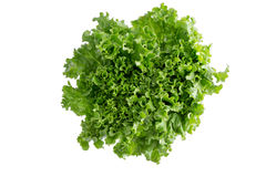 Head of crispy leafy Californian lettuce Royalty Free Stock Image