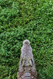 The head of a crocodile resting on the grass. Royalty Free Stock Images