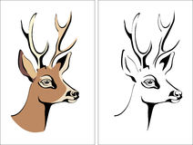 Head of a deer. Vector image, illustration, hart Stock Image
