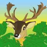 Head of a deer peeking out of green bushes in the forest, cartoo. N on a natural background, vector Royalty Free Stock Image