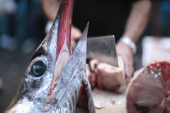 The head of delicacy marlin. Against the background of a fish dealer Stock Images