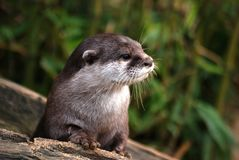Head, Details, Otter, Close-Up Stock Image