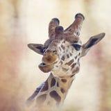 Head digital målning för giraff Arkivbilder