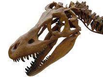 The head of the dinosaur. The head of the giant dinosaur Royalty Free Stock Image