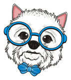 Head of dog with bow and glasses Royalty Free Stock Image