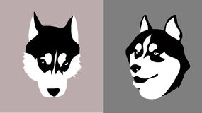Head dog breed Siberian Husky for insertion into m. Vector head of a dog breed Siberian Husky Stock Photo