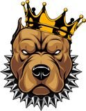 Head of a dog in the crown. Vector illustration of a pit bull dog head in a golden crown, king, on a white background.n Royalty Free Stock Image