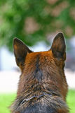 Head of a dog rear view Stock Photography