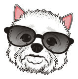 Head of dog in sunglasses Royalty Free Stock Image