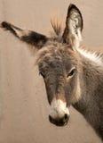 Head of Donkey Royalty Free Stock Image