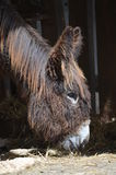 Head of a donkey in a barn Royalty Free Stock Image