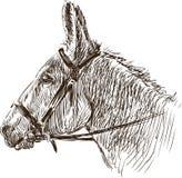 Head of donkey Royalty Free Stock Photo
