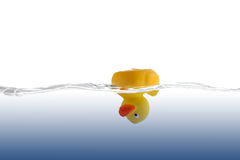 Head-Down Rubber Duckling Royalty Free Stock Photo