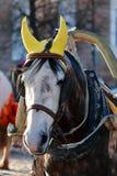 Head drawn by horses Royalty Free Stock Photo
