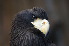 Head of eagle stock photos
