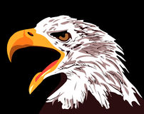 The head of an eagle on a black background. Vector illustration. vector illustration