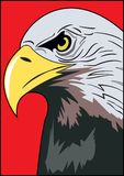 HEAD OF EAGLE. Color image of an eagle`s head with a curved beak on a red background Stock Photos