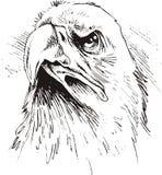 Head of eagle stock illustration