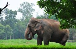 Head of elephant Stock Photos