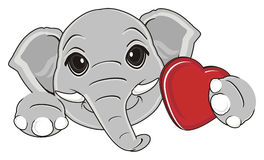 Head of elephant and heart Stock Photos