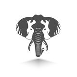 head of elephant Royalty Free Stock Photos