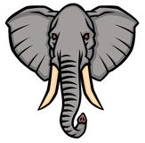 Head of an elephant with large tusks Stock Image