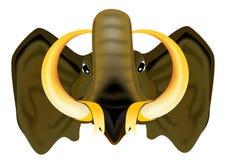 Head Elephant trunk front viwe Royalty Free Stock Image