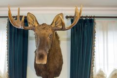 The head of an elk on the wall. royalty free stock images