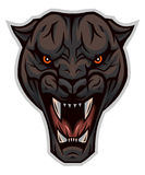 The head of an enraged panther Stock Images