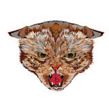 Head of an evil cat royalty free illustration