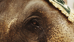 Head and eye of an elephant close-up. In Thailand Royalty Free Stock Images