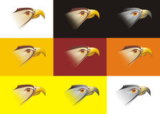 Head of a falcon. Illustration of the head of a falcon in various colors and shades presented on nine different backgrounds including black, white, brown, orange Royalty Free Stock Images