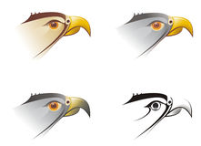 Head of a falcon illustration Royalty Free Stock Image