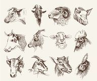 Head of farm animals. Set vector sketches Stock Image
