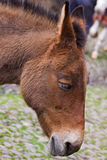 Head of a Farm Donkey Stock Image