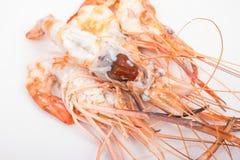Head fat or egg raw tiger fresh shrimps Stock Photo