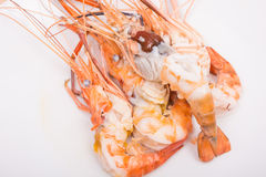 Head fat or egg raw tiger fresh shrimps Royalty Free Stock Images