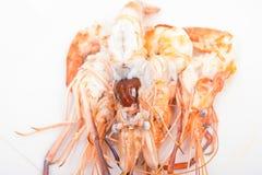 Head fat or egg raw tiger fresh shrimps Stock Images