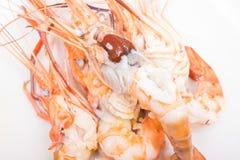 Head fat or egg raw tiger fresh shrimps Stock Photos