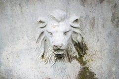 Head, Fauna, Snout, Goats