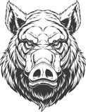 Head ferocious boar. Vector illustration, the head of a ferocious wild boar, on a white background Stock Photos