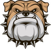 Head ferocious bulldog. Vector illustration head ferocious bulldog mascot, on a white background Royalty Free Stock Images