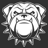 The head of a fierce bulldog. Vector illustration head ferocious bulldog mascot, on a black background Royalty Free Stock Photography