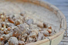 Head of  finger root  on bamboo basket Stock Photography