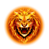 Head of fire lion. Head of aggressive fire lion  on white background Stock Photo